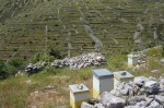 Hives & dry walls